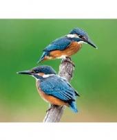 Dieren magneet 3d ijsvogeltjes trend