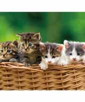 Dieren magneet 3d kittens in mand trend