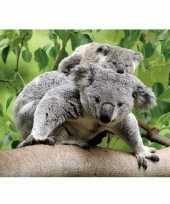 Dieren magneet 3d koalaberen trend