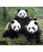 Dieren magneet 3d panda familie trend