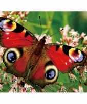 Dieren magneet 3d pauwoog vlinder trend