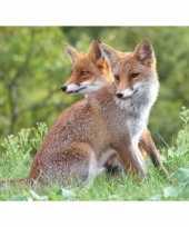 Dieren magneet 3d rode vossen trend