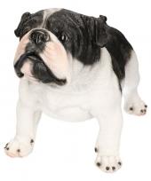 Dierenbeeld engelse bulldog staand 41 cm trend