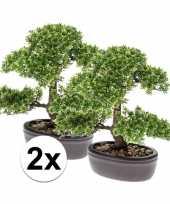 Ficus mini bonsai nepplant 32 cm 2 stuks trend