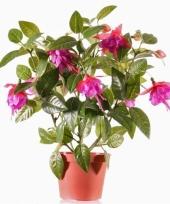 Fuchsia plant donkerroze in pot 30 cm trend