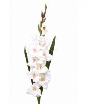 Gladiool bloem 102 cm wit trend
