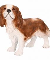 Honden beelden bruine king charles hond trend