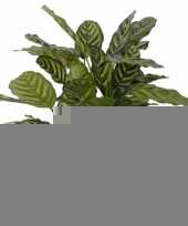 Kantoor kunstplant calathea 67 cm trend