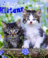 Katten kalender kittens 2018 trend