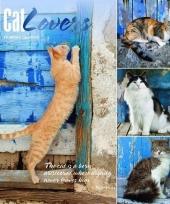 Katten poezen kalender kattenliefhebbers 2018 trend