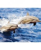 Kinder placemats dolfijnen trend