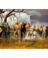 Kinder placemats olifantjes trend