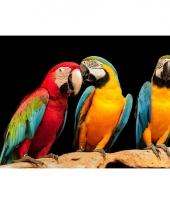 Kinder placemats papegaaien trend