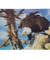 Kinder vogel placemats adelaars trend