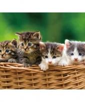 Kitten placemat 40 cm trend