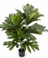 Kunst broodboom artocarpus altilis trend