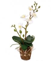 Kunst orchidee kunstplant wit trend