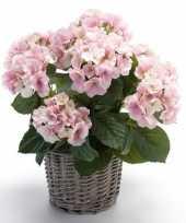 Kunstplant hortensia roze in rieten mand 45 cm trend