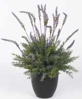 Lavendel plant in pot 30 cm trend