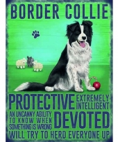 Metalen plaat bordercollie trend