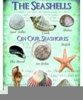 Metalen plaat met zee schelpen trend