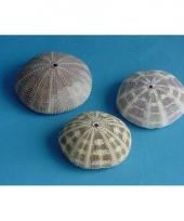 Mini zeeappel 8 cm trend
