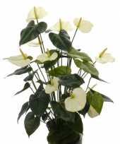 Namaak plant witte anthurium 80 cm trend