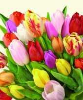Nederlandse tulpen servetten 60 stuks trend