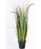 Nep grasplant bloeiend 100 cm trend