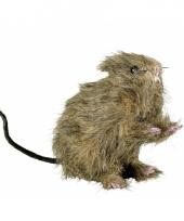 Nep rat trend