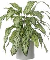 Nepplant aglaonema 71 cm trend