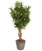 Oleander struik met 840 bladeren trend