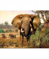 Olifant placemat 40 cm trend