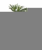Philo selloumplant 80 cm groot trend