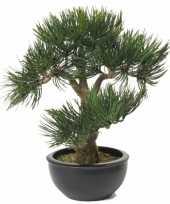 Pinus deniflora nepplant 33 cm trend