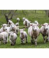 Placemat schapen en lammetjes 3d 30 x 40 cm trend
