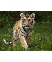Placemat tijger 3d 28 x 44 cm trend