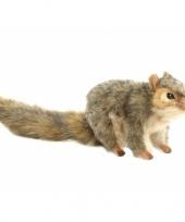 Pluche eekhoorns knuffels 22 cm trend