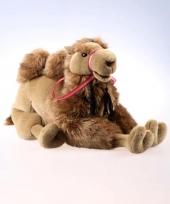 Pluche kamelen knuffels 60 cm trend