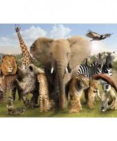 Poster dierenrijk afrika 47 x 67 cm trend