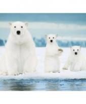Poster ijsberen trend