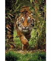 Poster siberische tijger 91 x 61 cm trend