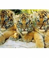 Poster tijger welpjes 61 x 91 cm trend