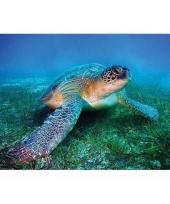 Poster zeeschildpad trend