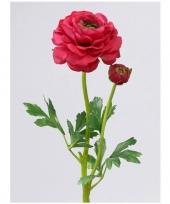 Ranonkel rood roze 8 cm diameter trend
