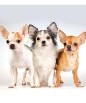 Servetten dieren thema hond 3 laags 20 stuks trend 10079562
