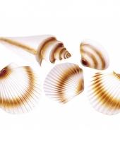 Strand schelpen decoratie trend