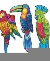 Tropische vogels muurversiering 43 cm trend