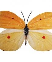 Tuin vlinder geel oranje van metaal 42 cm trend