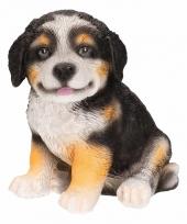Tuinbeeldje berner sennen hondje 15 cm trend